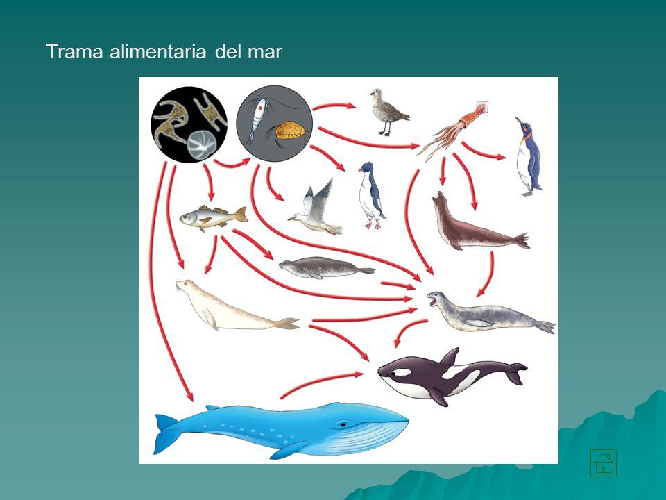 Trama alimentaria del mar