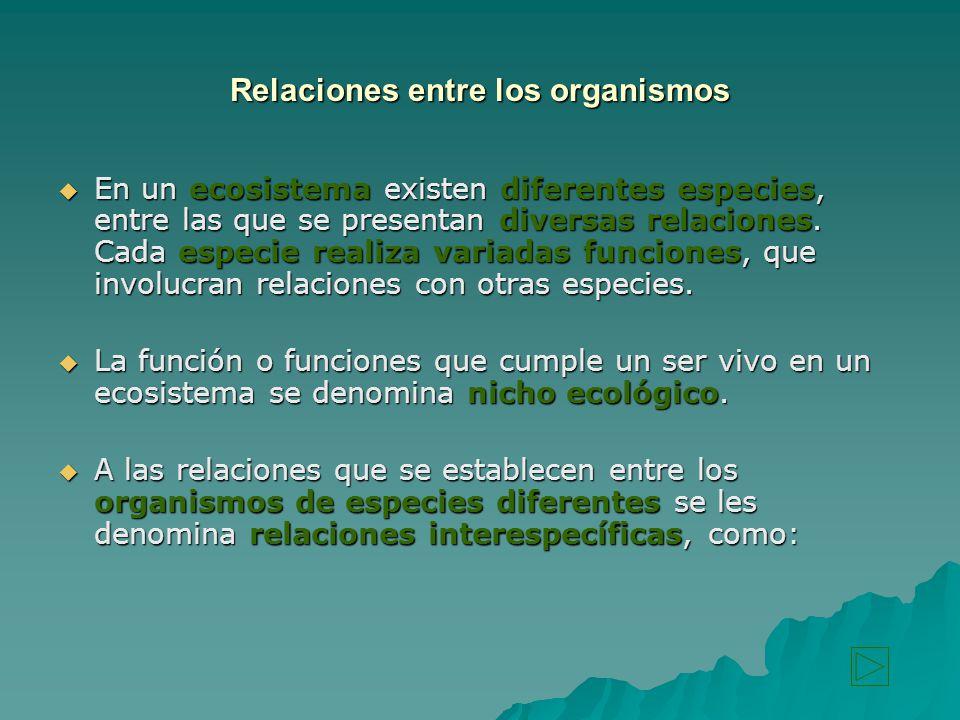 Relaciones entre los organismos
