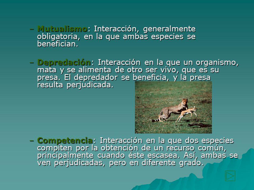 Mutualismo: Interacción, generalmente obligatoria, en la que ambas especies se benefician.