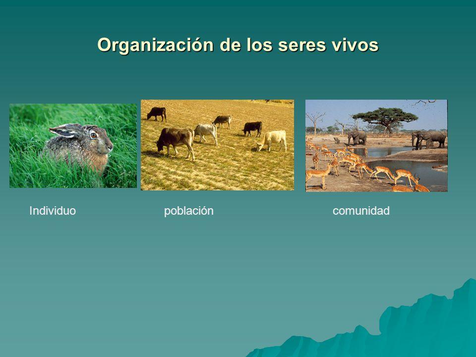 Organización de los seres vivos