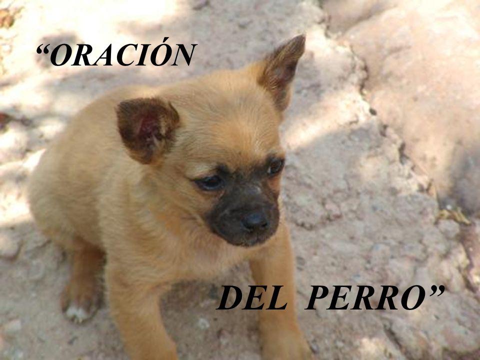 ORACIÓN DEL PERRO