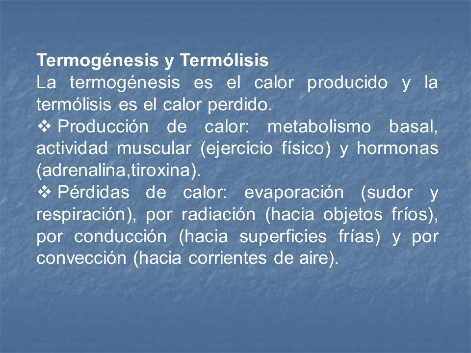 Termogénesis y Termólisis