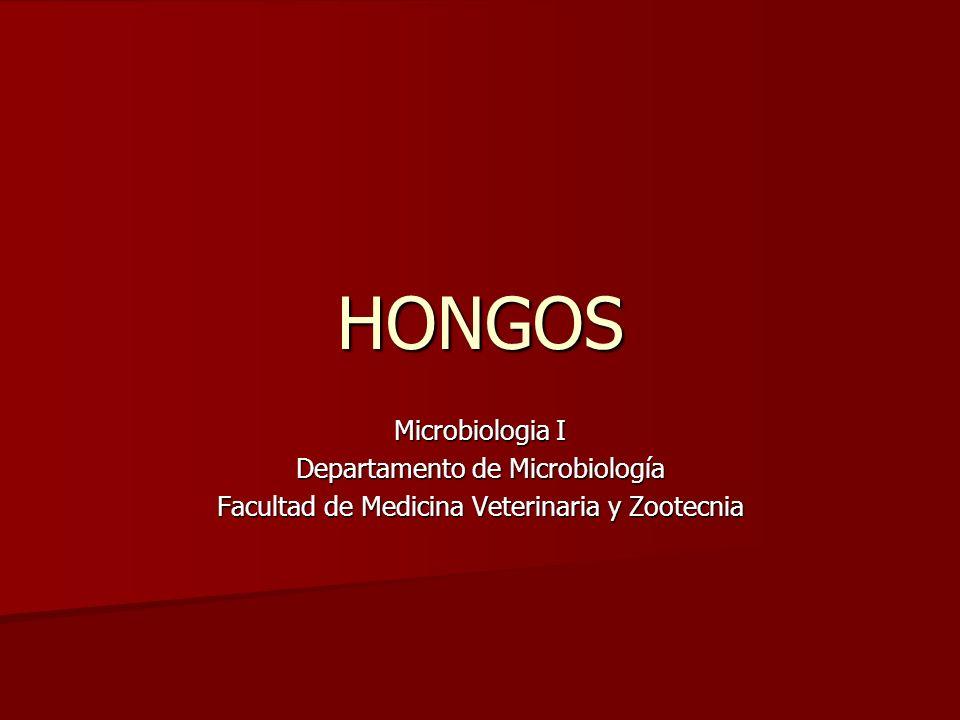 HONGOS Microbiologia I Departamento de Microbiología