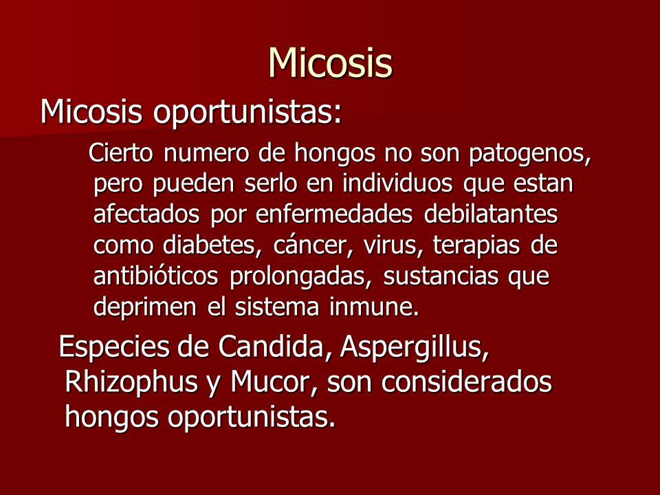 Micosis Micosis oportunistas: