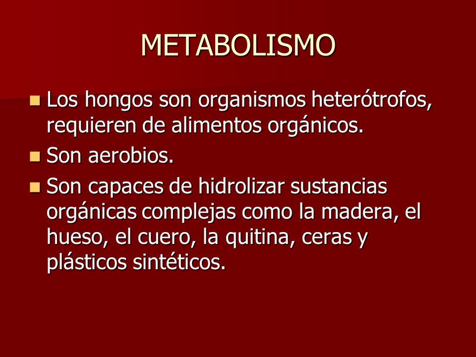 METABOLISMOLos hongos son organismos heterótrofos, requieren de alimentos orgánicos. Son aerobios.