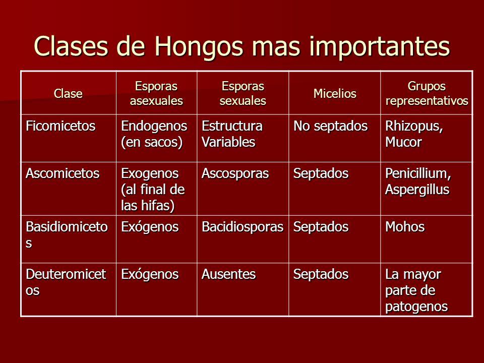 Clases de Hongos mas importantes