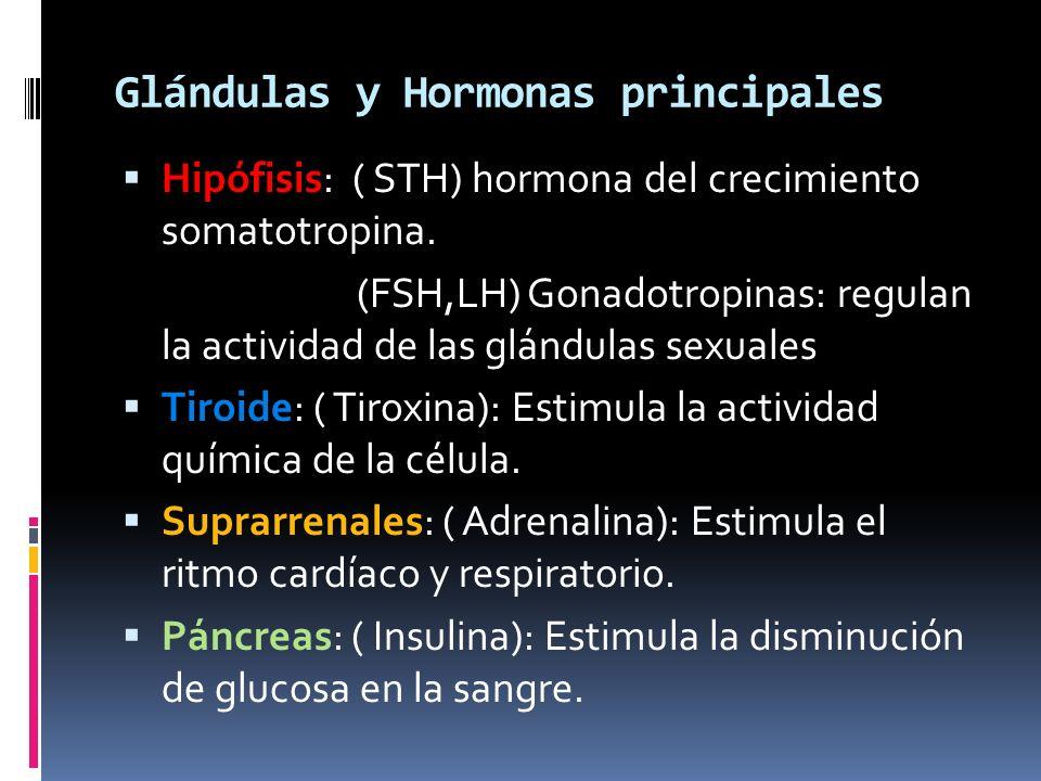 Glándulas y Hormonas principales