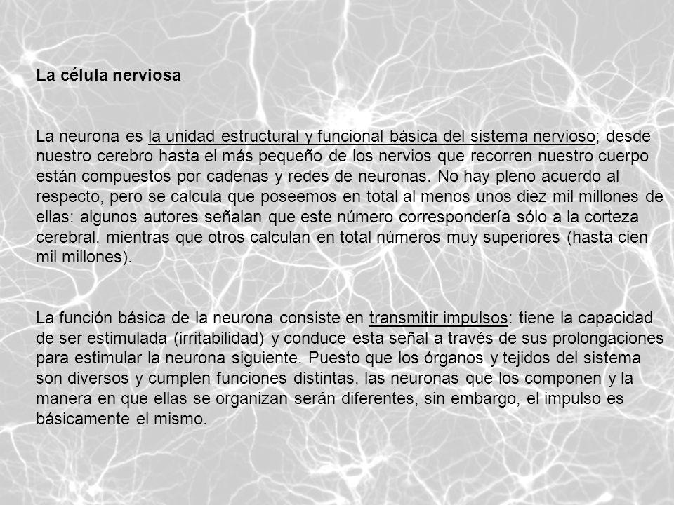 La célula nerviosa