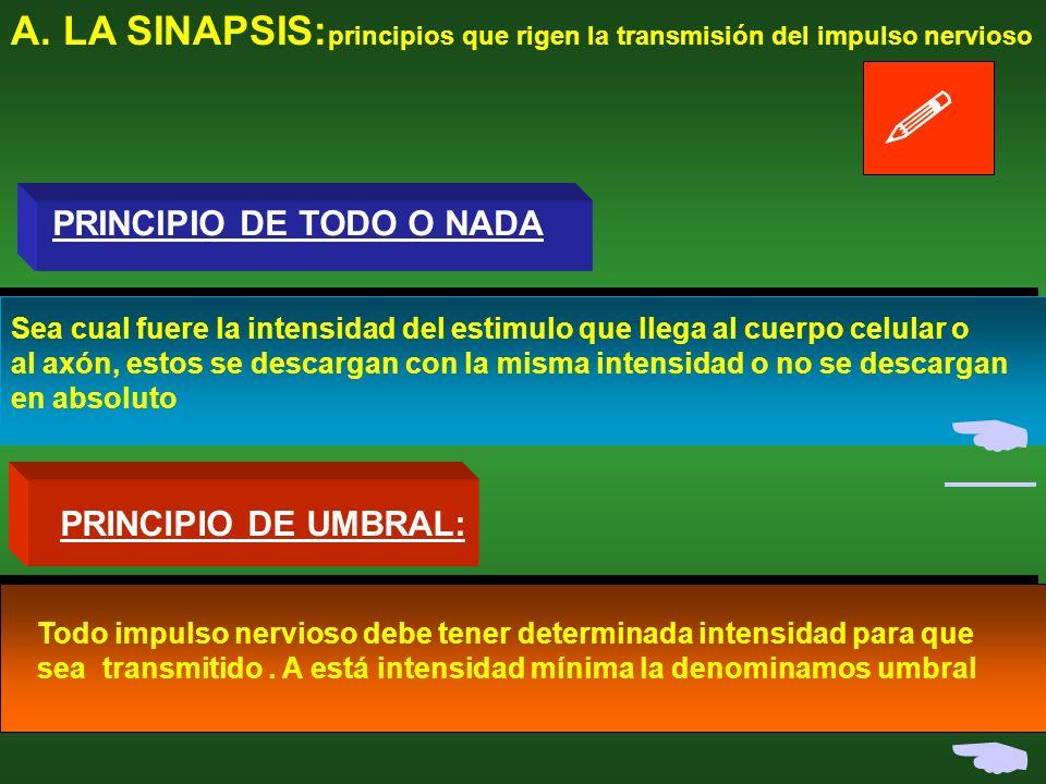 A. LA SINAPSIS:principios que rigen la transmisión del impulso nervioso