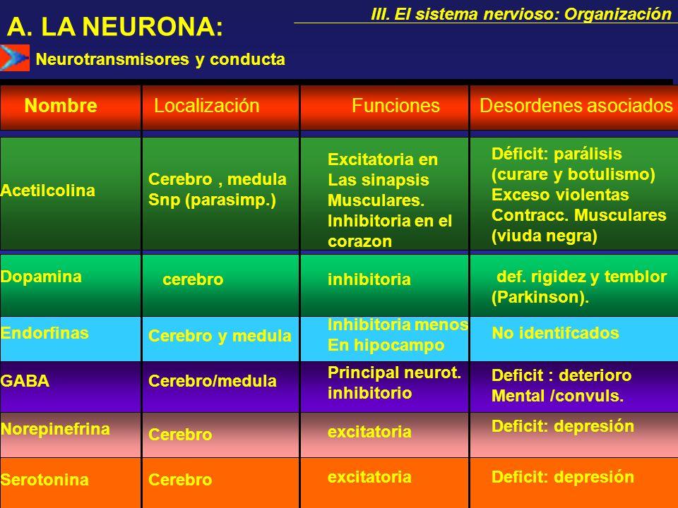A. LA NEURONA: Nombre Localización Funciones Desordenes asociados