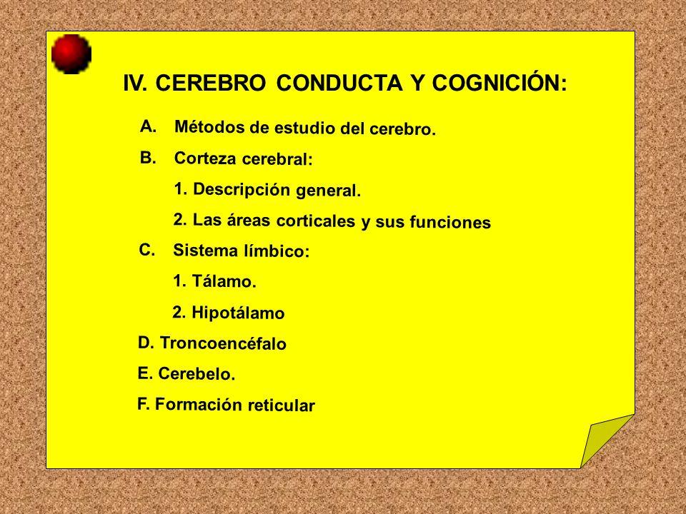 IV. CEREBRO CONDUCTA Y COGNICIÓN: