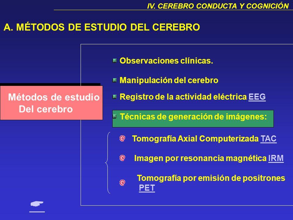  A. MÉTODOS DE ESTUDIO DEL CEREBRO Métodos de estudio Del cerebro