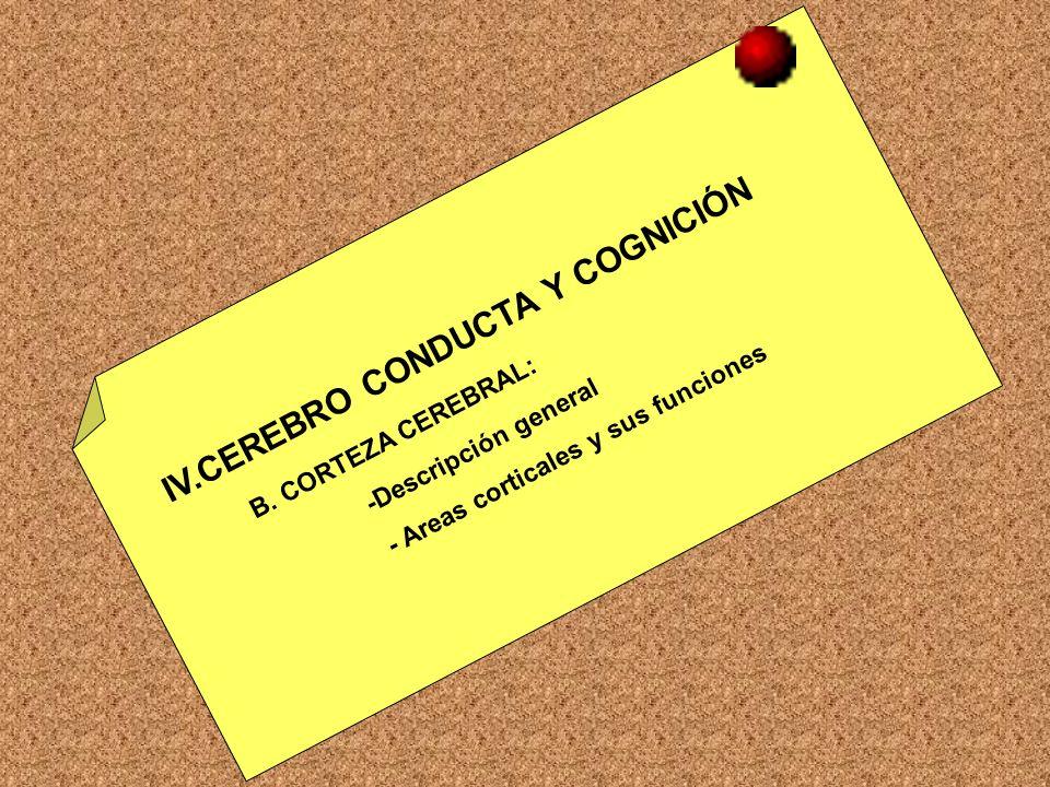 IV.CEREBRO CONDUCTA Y COGNICIÓN