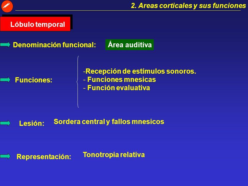  2. Areas corticales y sus funciones. Lóbulo temporal. Denominación funcional: Área auditiva. Recepción de estímulos sonoros.