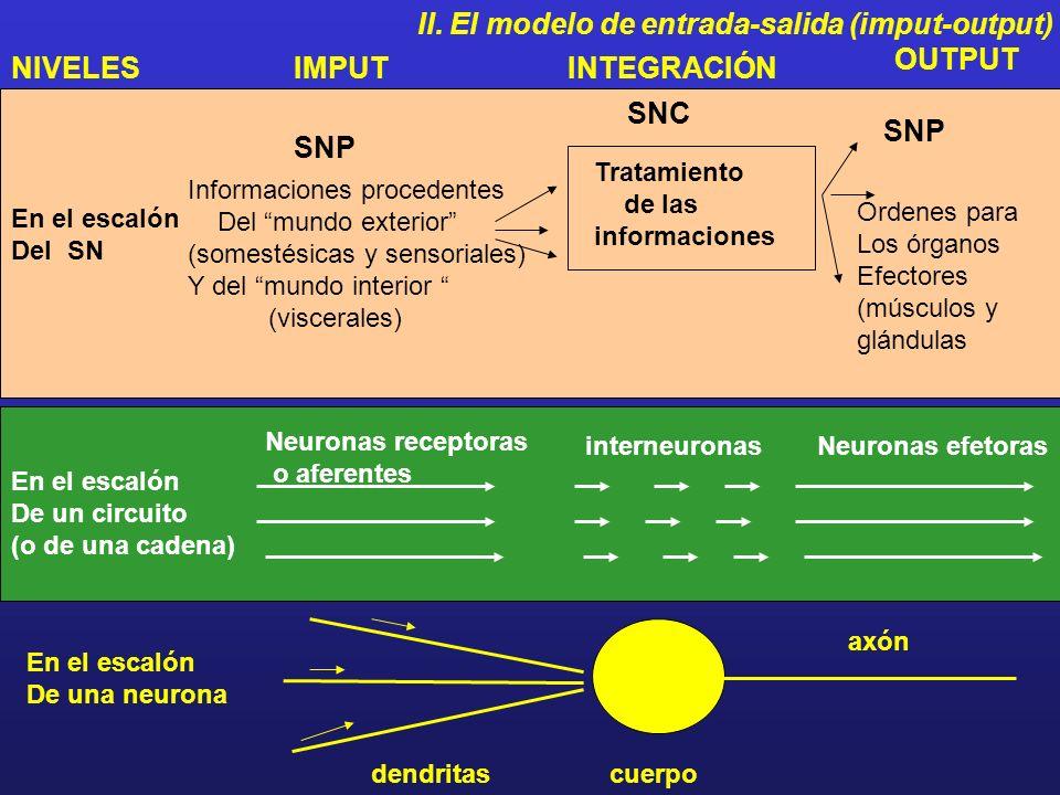 II. El modelo de entrada-salida (imput-output)