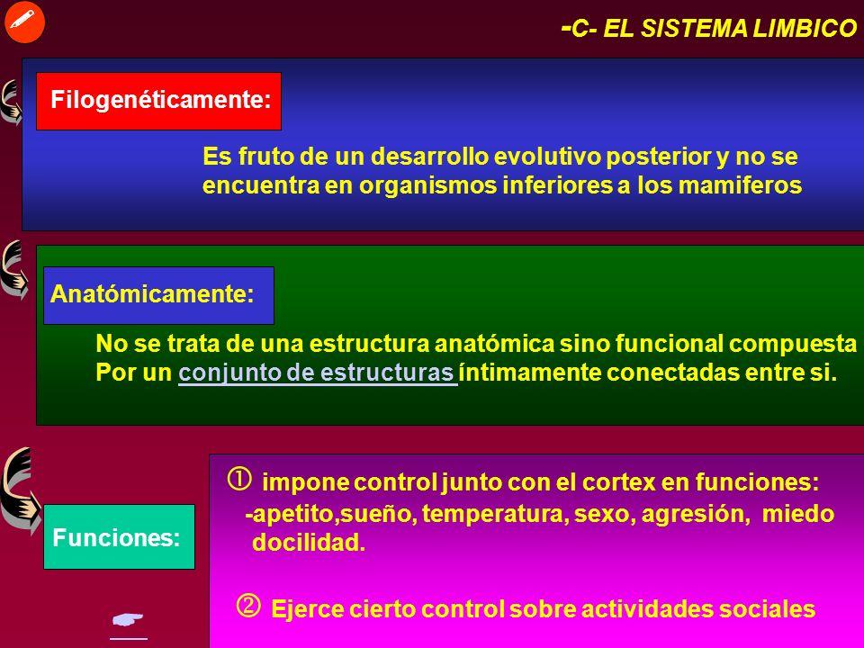  -C- EL SISTEMA LIMBICO