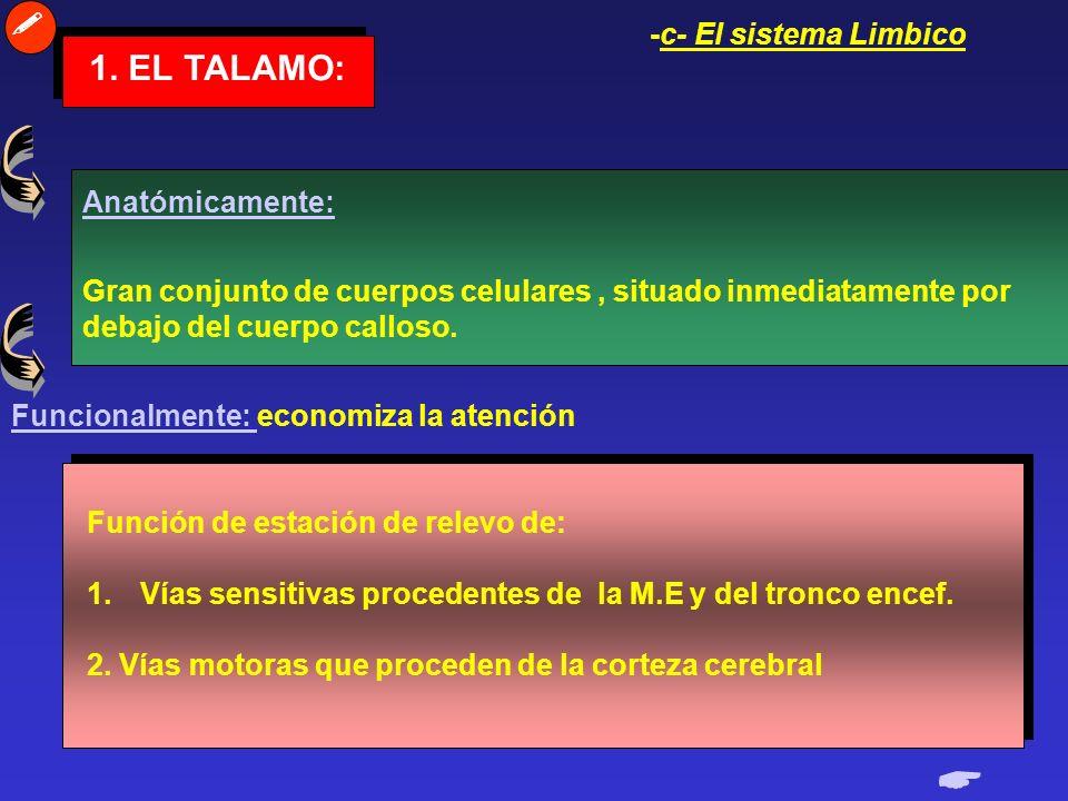  1. EL TALAMO:  -c- El sistema Limbico Anatómicamente: