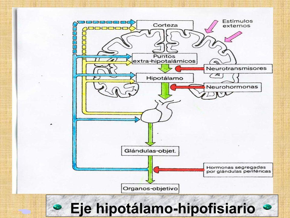 Eje hipotálamo-hipofisiario