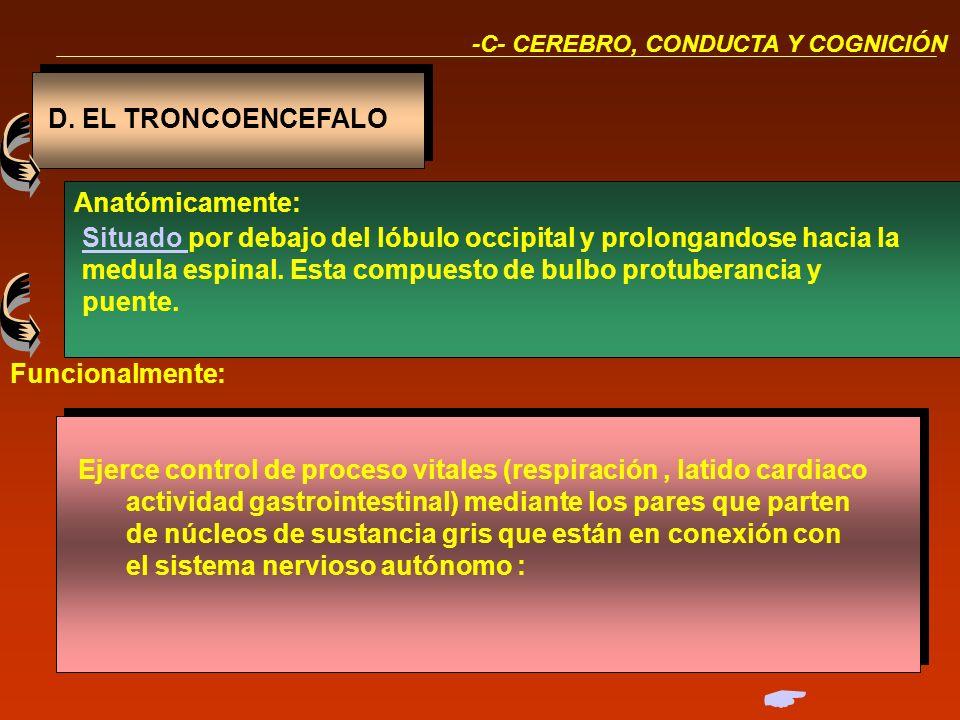  D. EL TRONCOENCEFALO Anatómicamente: