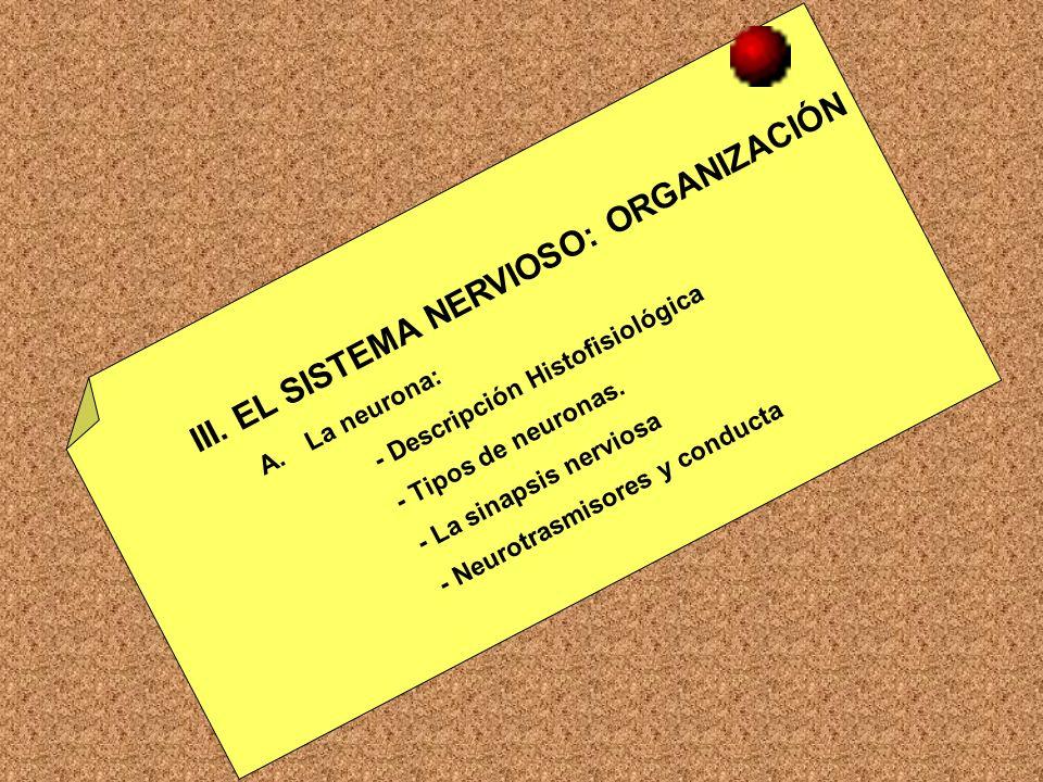 III. EL SISTEMA NERVIOSO: ORGANIZACIÓN