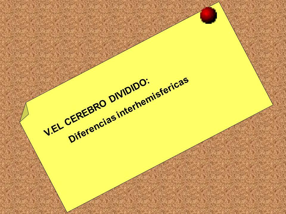 V.EL CEREBRO DIVIDIDO: Diferencias interhemisfericas