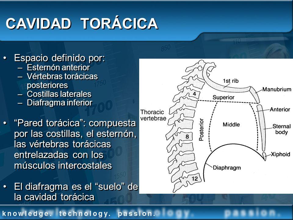 CAVIDAD TORÁCICA Espacio definido por: