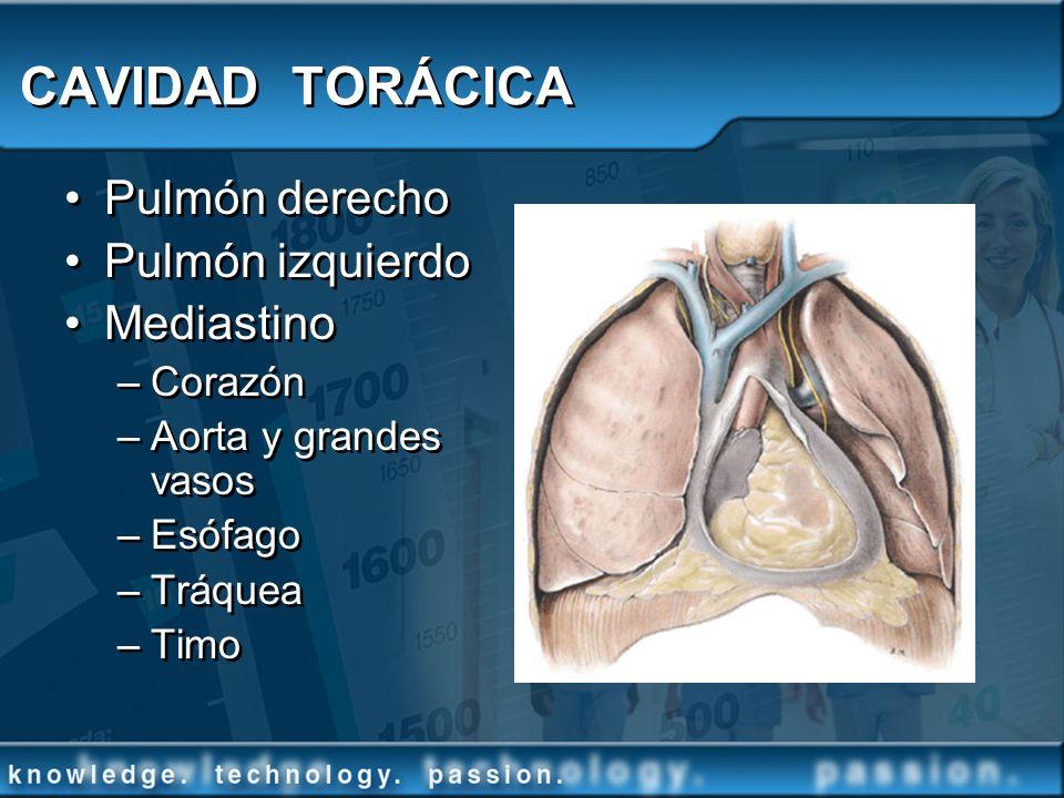 CAVIDAD TORÁCICA Pulmón derecho Pulmón izquierdo Mediastino Corazón