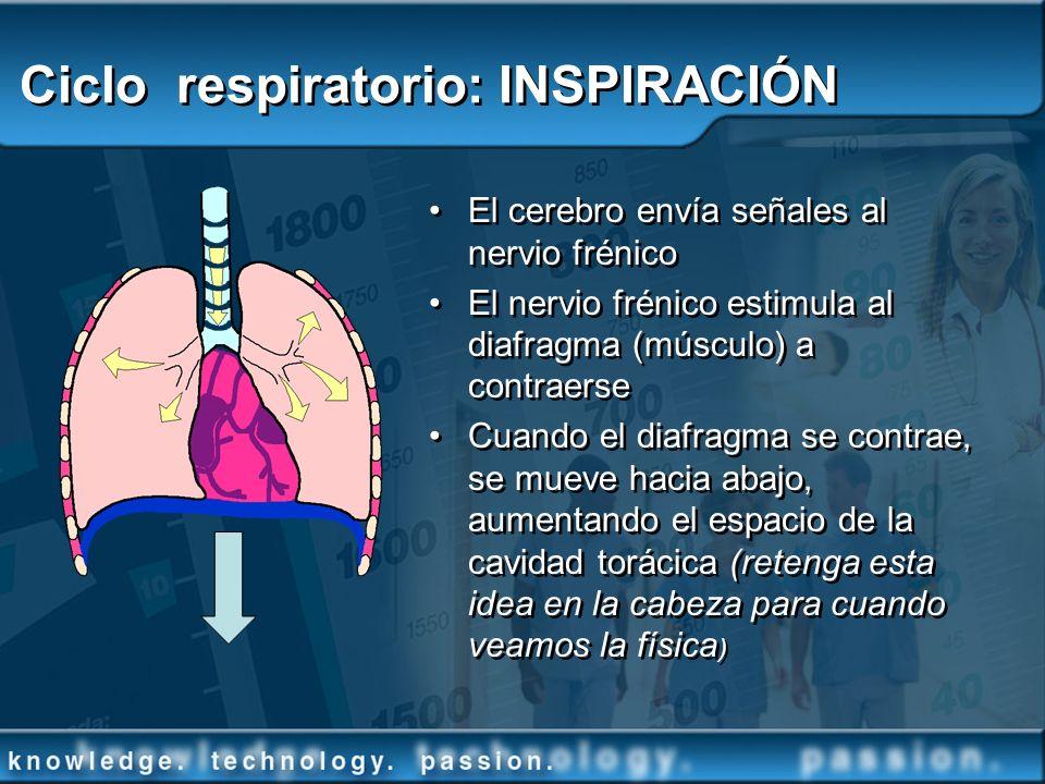 Ciclo respiratorio: INSPIRACIÓN