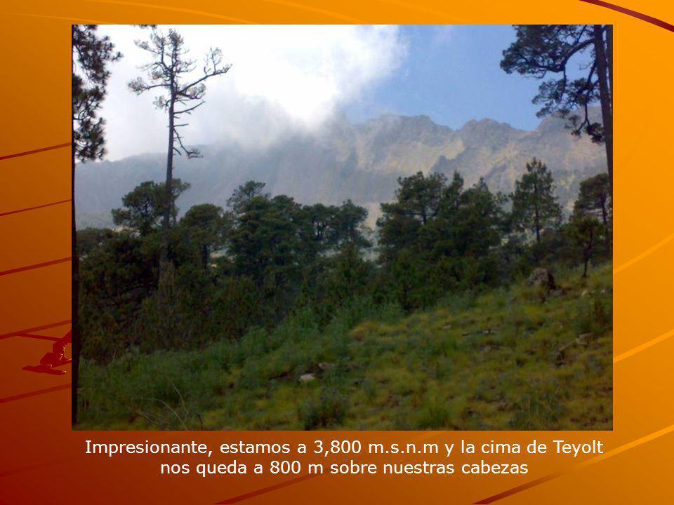 Impresionante, estamos a 3,800 m.s.n.m y la cima de Teyolt