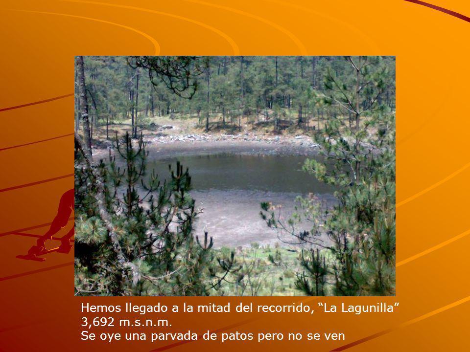 Hemos llegado a la mitad del recorrido, La Lagunilla