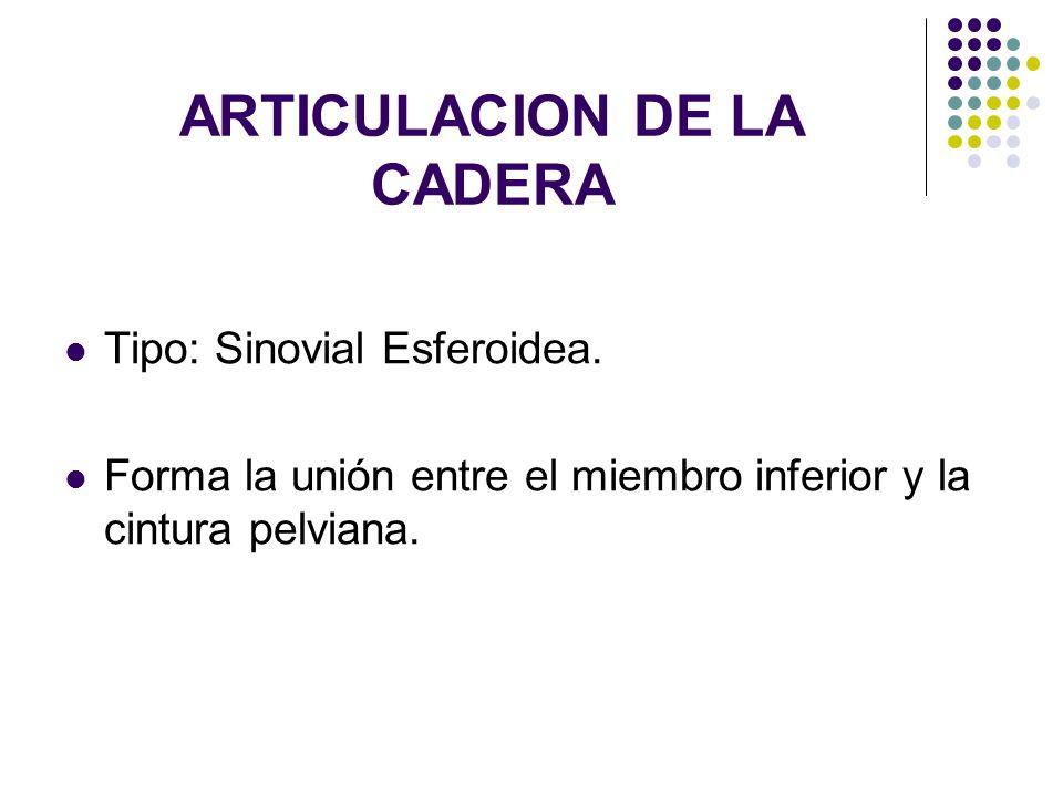 ARTICULACION DE LA CADERA