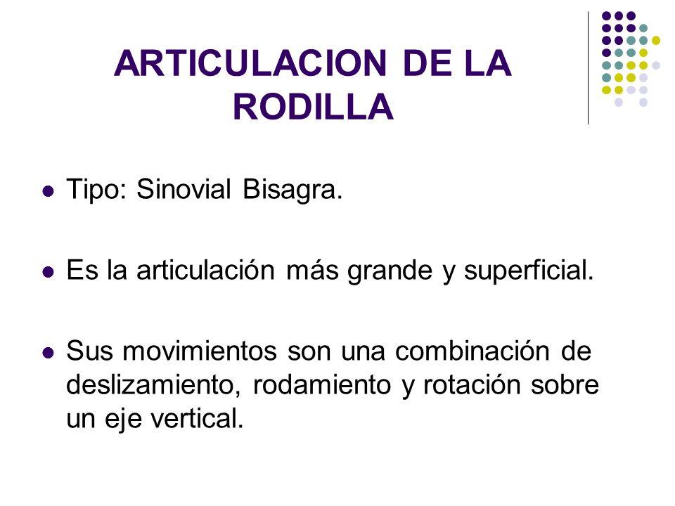 ARTICULACION DE LA RODILLA