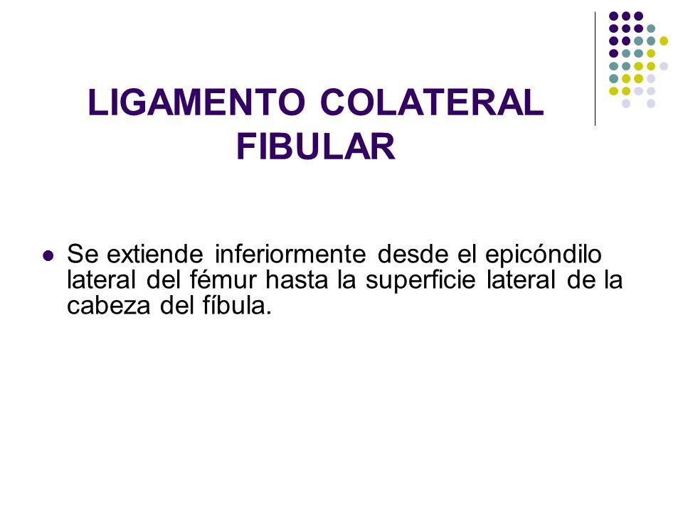 LIGAMENTO COLATERAL FIBULAR