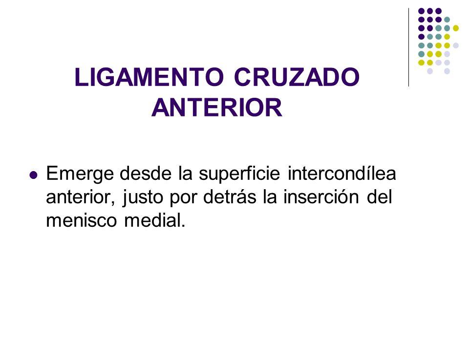 LIGAMENTO CRUZADO ANTERIOR