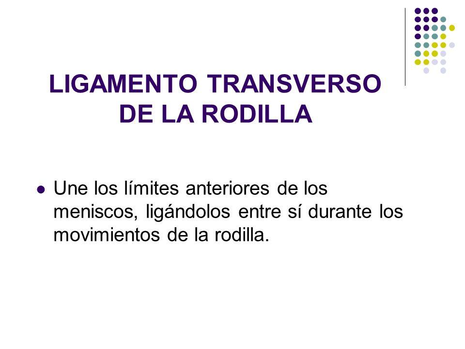LIGAMENTO TRANSVERSO DE LA RODILLA