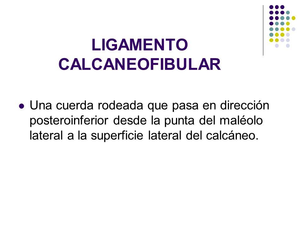 LIGAMENTO CALCANEOFIBULAR