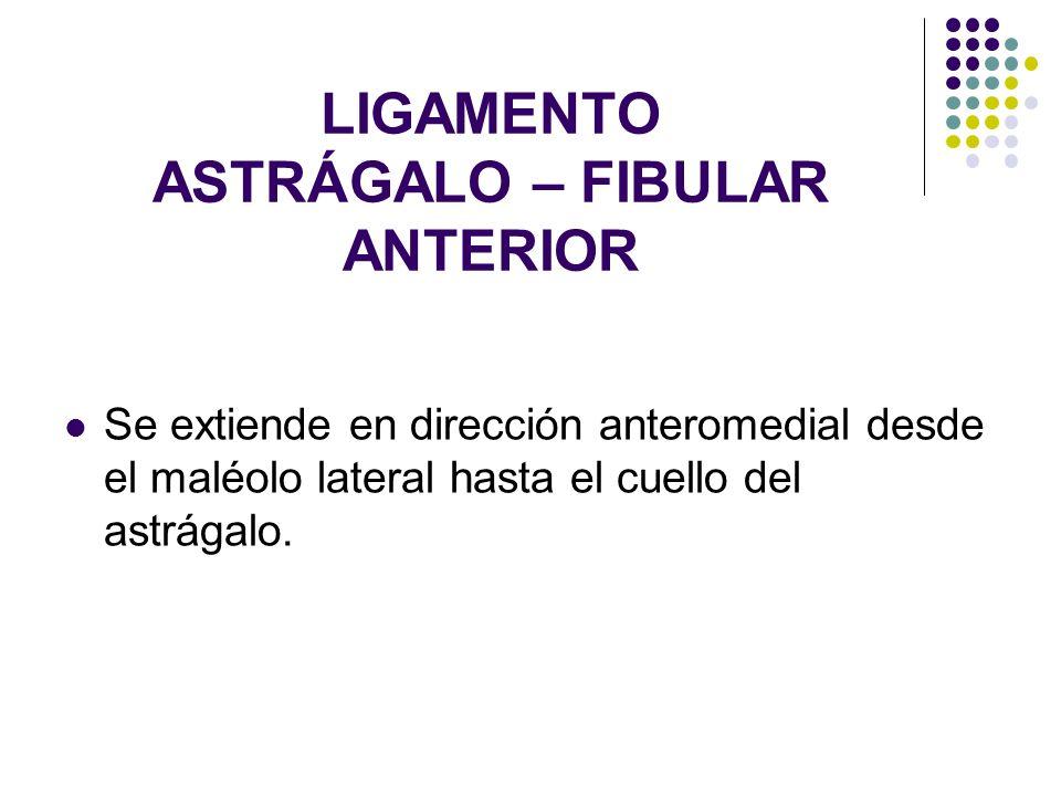 LIGAMENTO ASTRÁGALO – FIBULAR ANTERIOR