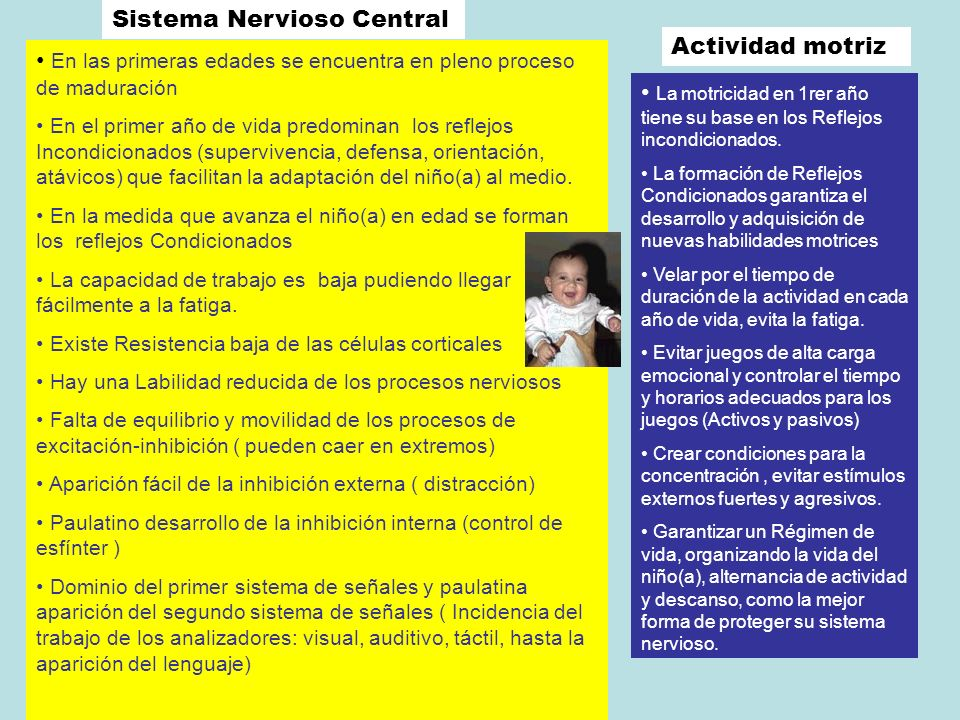 Sistema Nervioso Central Actividad motriz