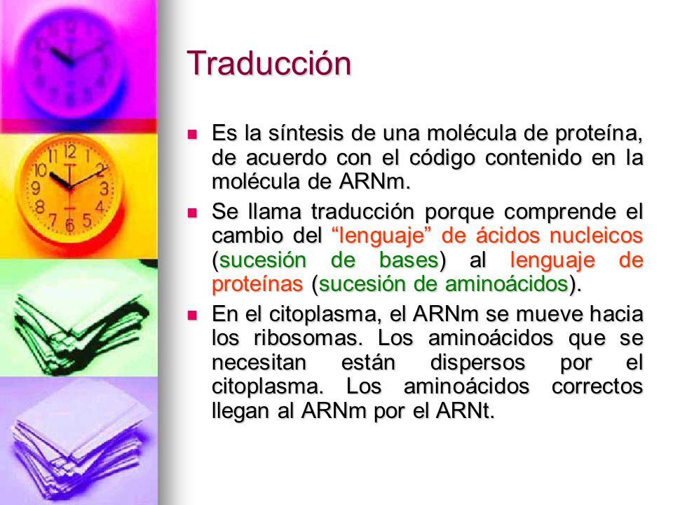 TraducciónEs la síntesis de una molécula de proteína, de acuerdo con el código contenido en la molécula de ARNm.