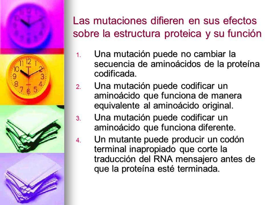 Las mutaciones difieren en sus efectos sobre la estructura proteica y su función