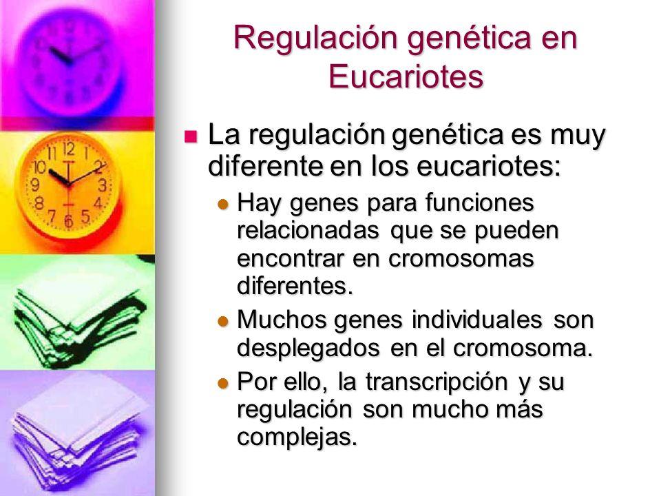 Regulación genética en Eucariotes