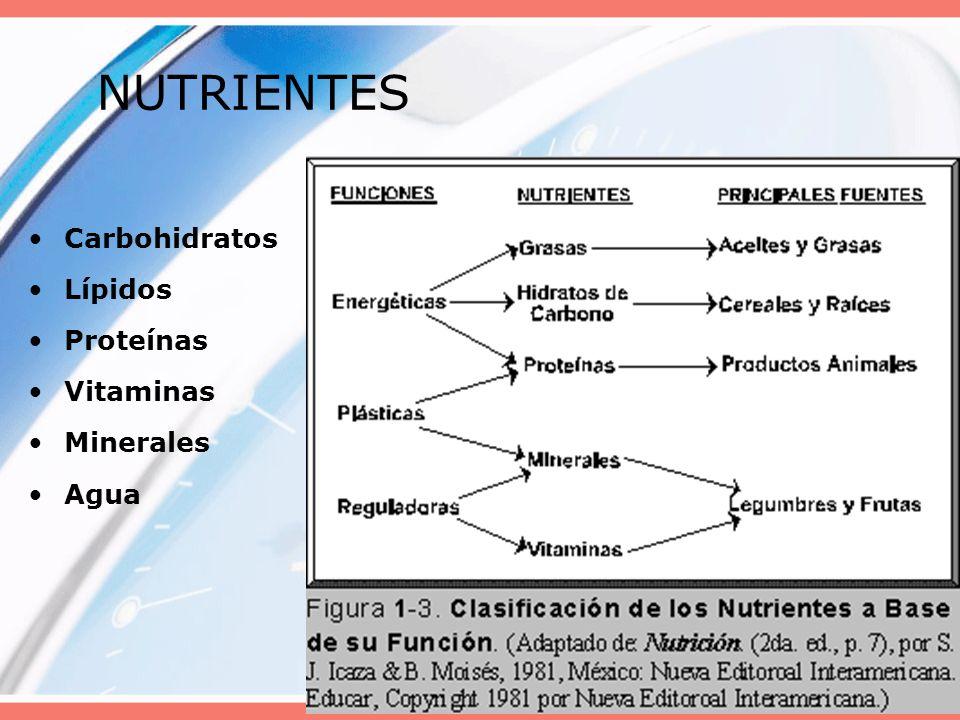 NUTRIENTES Carbohidratos Lípidos Proteínas Vitaminas Minerales Agua