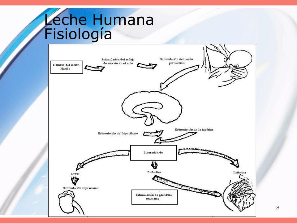 Leche Humana Fisiología