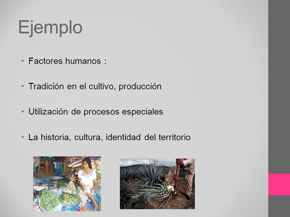 Ejemplo Factores humanos : Tradición en el cultivo, producción