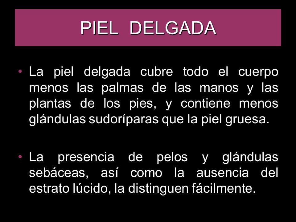 PIEL DELGADA