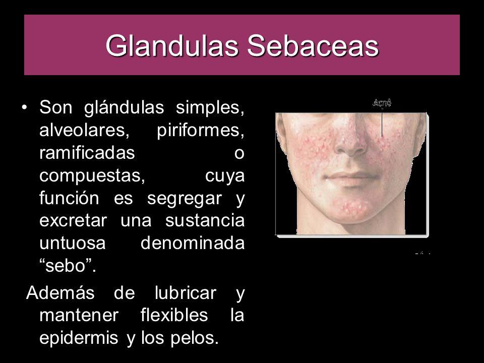 Glandulas Sebaceas