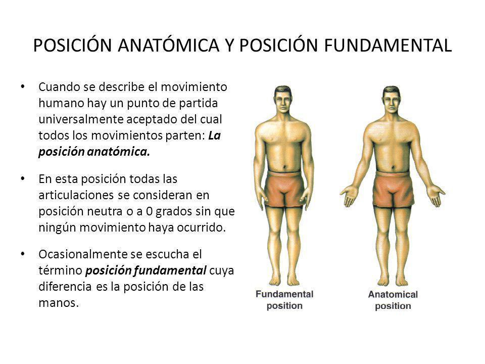 POSICIÓN ANATÓMICA Y POSICIÓN FUNDAMENTAL