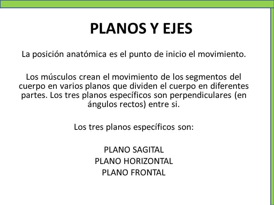 PLANOS Y EJES La posición anatómica es el punto de inicio el movimiento.