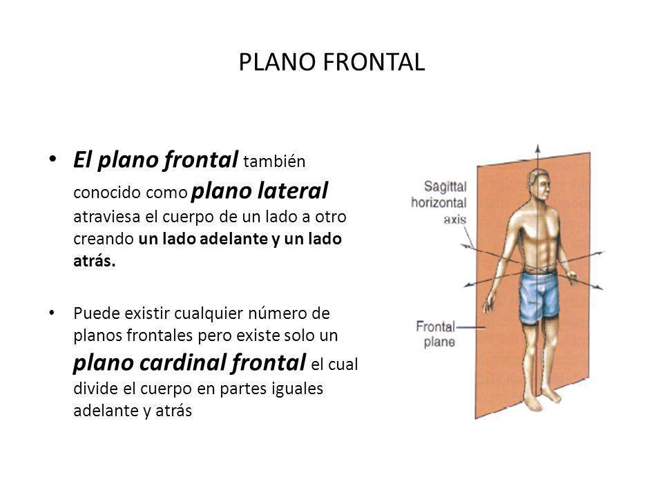 PLANO FRONTAL El plano frontal también conocido como plano lateral atraviesa el cuerpo de un lado a otro creando un lado adelante y un lado atrás.