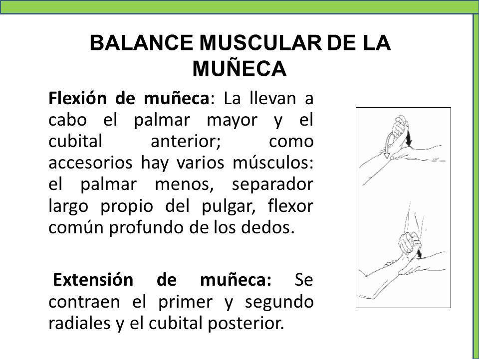 BALANCE MUSCULAR DE LA MUÑECA